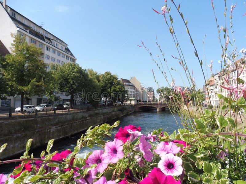 12 67 2000 02 GF Strasbourg Petite France. Immeubles Fleurs Eaux ciel Rouges Roses Alsace Europe Petunia Règne/Plantae Arbre stock photo
