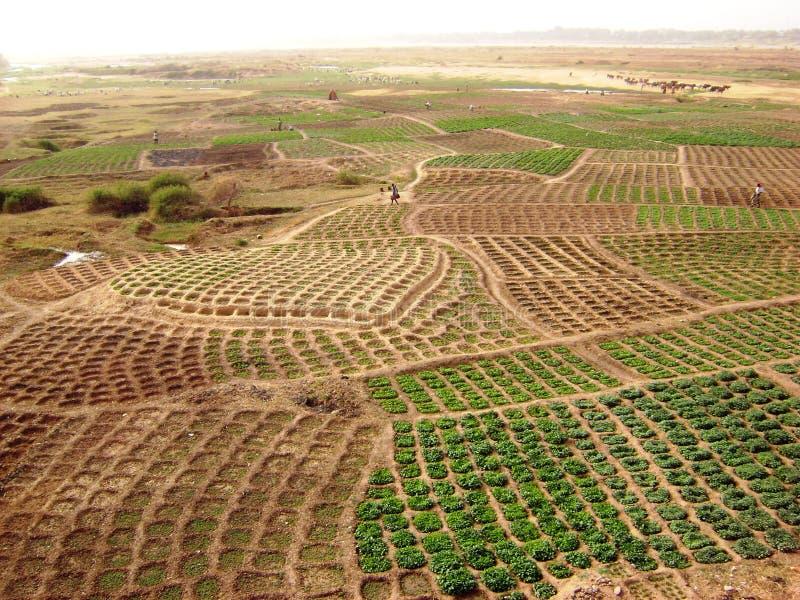 Ghana-Felder - afrikanische landwirtschaftliche Landschaft lizenzfreie stockbilder