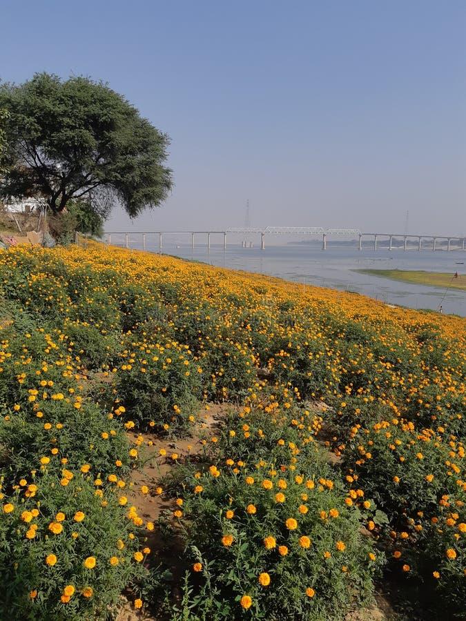 Ghat de Kashi foto de stock