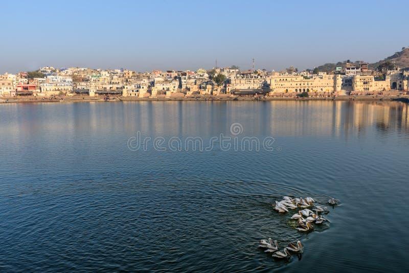 Ghats at Pushkar lake. Migratory Pelican Birds in lake. Rajasthan. India. Ghats at Pushkar holy lake. Migratory Pelican Birds in lake. Rajasthan. India royalty free stock photos