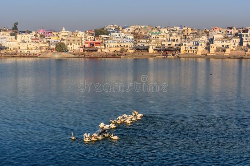 Ghats at Pushkar lake. Migratory Pelican Birds in lake. Rajasthan. India. Ghats at Pushkar holy lake. Migratory Pelican Birds in lake. Rajasthan. India stock photography