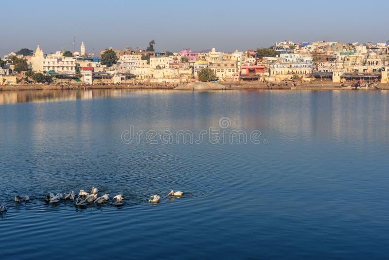 Ghats at Pushkar lake. Migratory Pelican Birds in lake. Rajasthan. India. Ghats at Pushkar holy lake. Migratory Pelican Birds in lake. Rajasthan. India stock photo