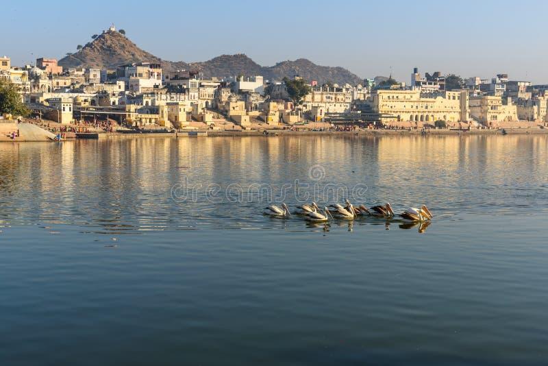 Ghats at Pushkar lake. Migratory Pelican Birds in lake. Rajasthan. India. Ghats at Pushkar holy lake. Migratory Pelican Birds in lake. Rajasthan. India royalty free stock photo