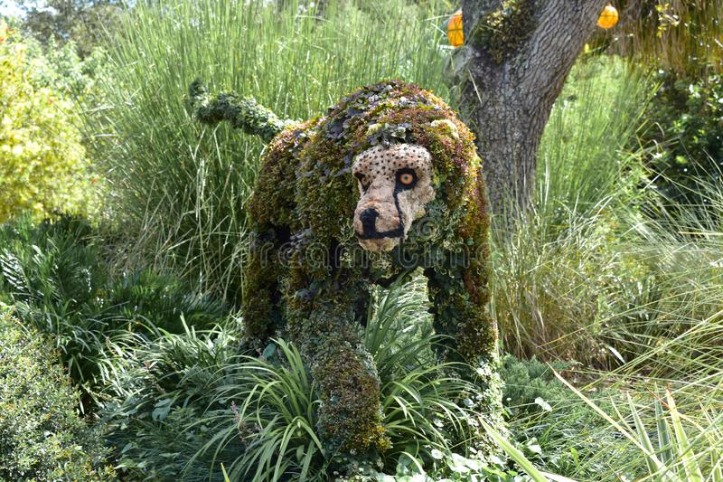 Ghepardo progettato con le piante al parco a tema di Tampa dei giardini di Bush fotografia stock libera da diritti