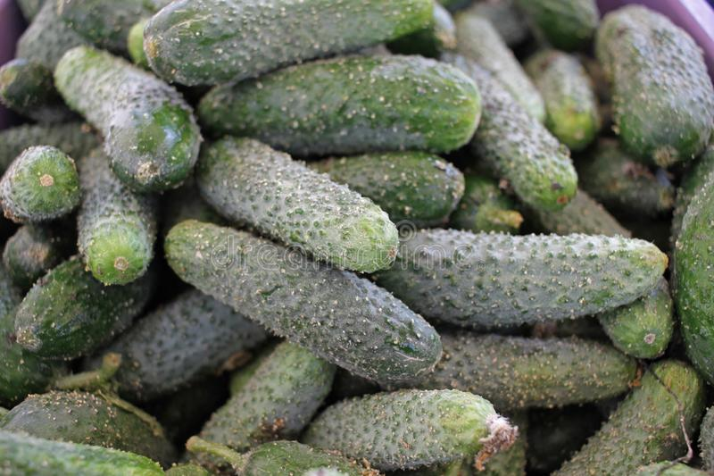 Raw pickles stock image