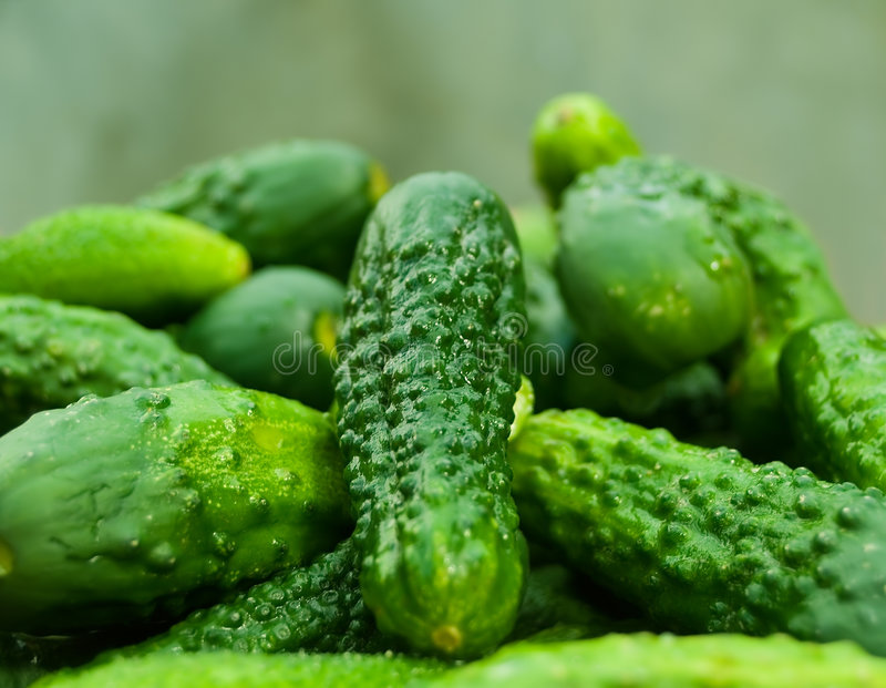 Gherkins stock image