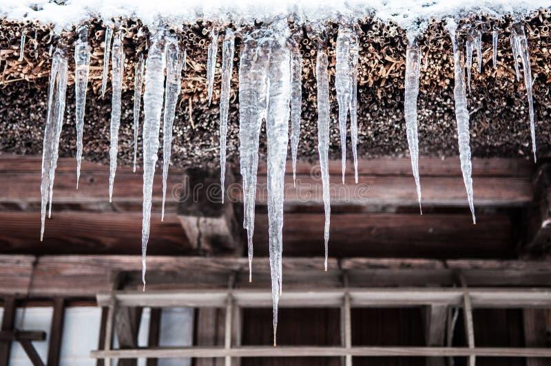 Ghiacci le dighe, ghiaccioli che appendono sulla gronda della grondaia del tetto del filo nell'orario invernale immagine stock
