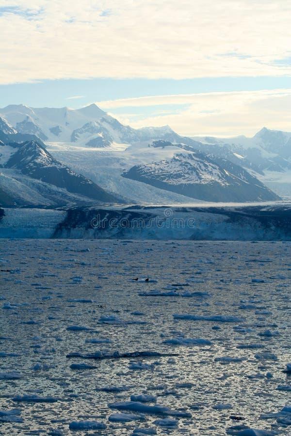 Ghiacciaio nell'Alaska fotografia stock libera da diritti