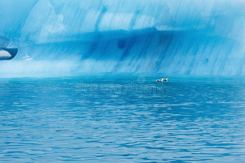Ghiaccio blu a Icelake Jokulsarlon Islanda Alto vicino del ghiacciaio fotografia stock libera da diritti