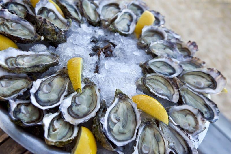 Ghiaccio di ostriche e limone fotografie stock libere da diritti