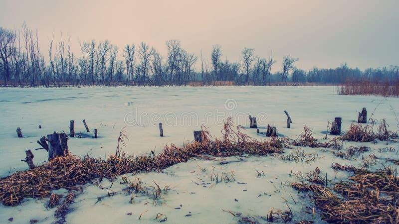 Ghiaccio sul fiume e sulle vecchie canne Sorgente in anticipo fotografie stock libere da diritti
