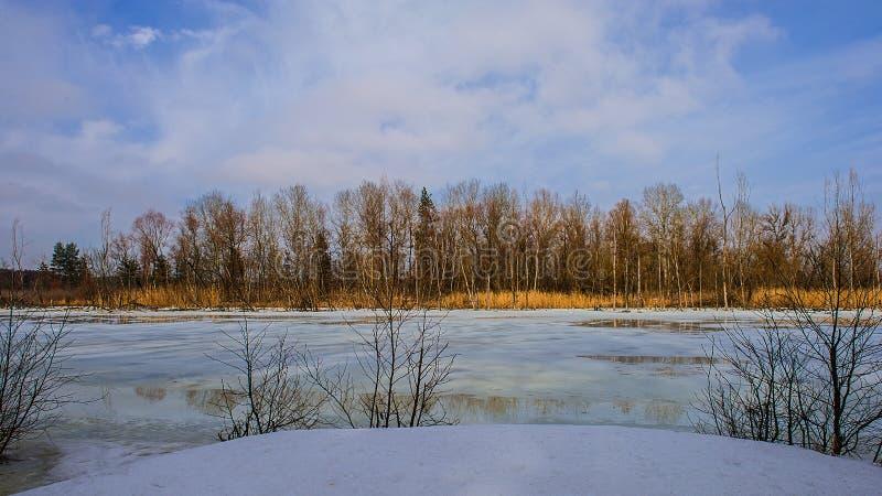 Ghiaccio sul fiume e sulle vecchie canne Sorgente in anticipo fotografia stock
