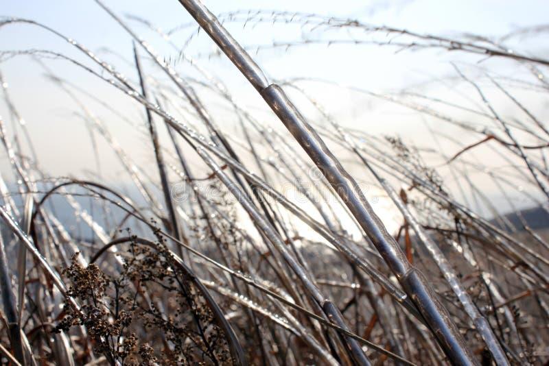 Ghiaccio sull'erba fotografie stock