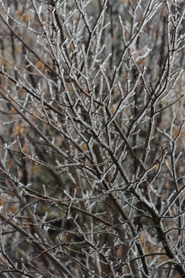 Ghiaccio sulle filiali Albero ghiacciato fotografie stock libere da diritti