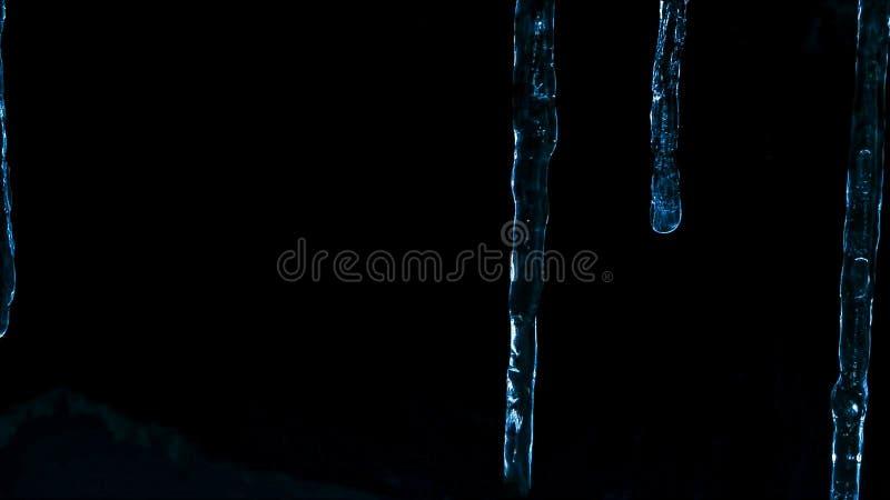 Ghiaccioli alla notte contro il buio della foresta e della penombra di inverno fotografia stock