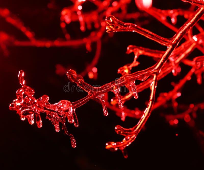 Ghiaccioli congelati sulla scena di notte dei rami di albero fotografia stock
