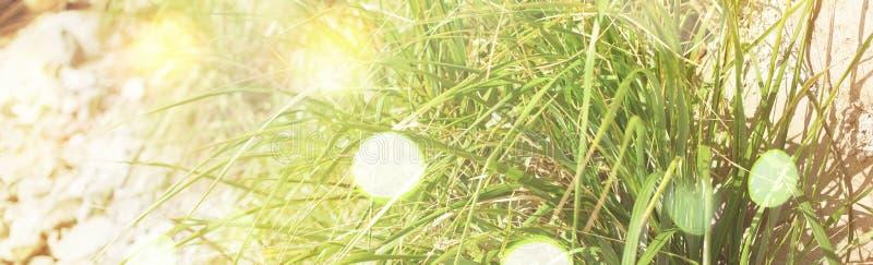 Ghiaia della traccia dello sfondo naturale dell'insegna ed erba verde fotografia stock