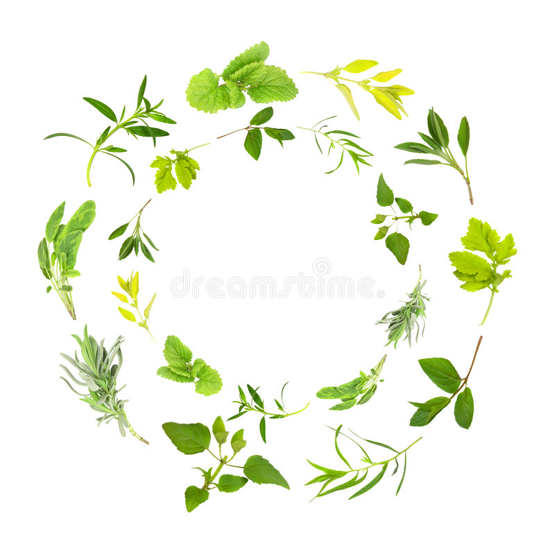 Ghirlande del foglio dell'erba fotografia stock