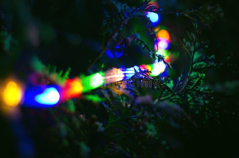 Ghirlande magiche della neve dell'albero di Natale immagine stock libera da diritti