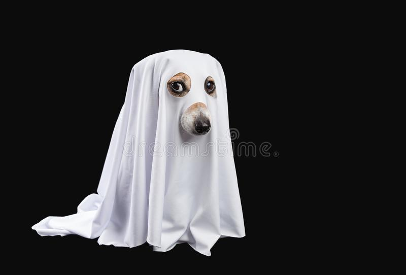 Ghost on black background. Halloween carnaval party stock image