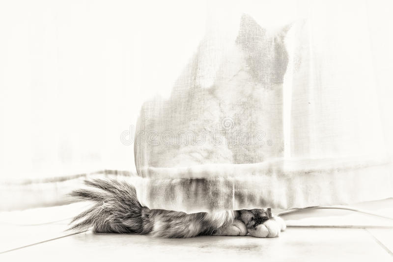 The ghost cat stock images