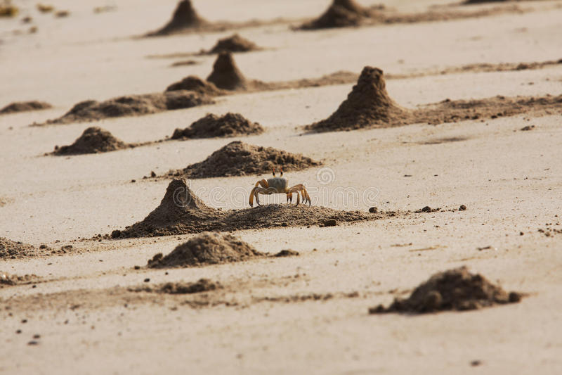 Ghost Crab Mounds. The Ghost Crab builds a mound close to its home in the sand to attract females. This beach, located on the West coast of Musandam, Oman, was stock photography
