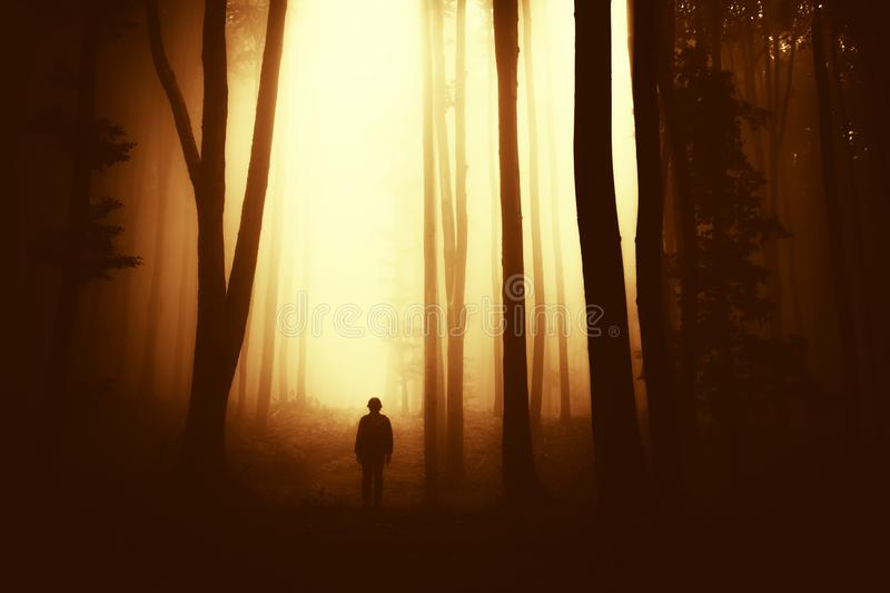 Ghost in the fog in spooky woods. Silhouette of ghost in haunted Halloween woods at sunset royalty free stock photography