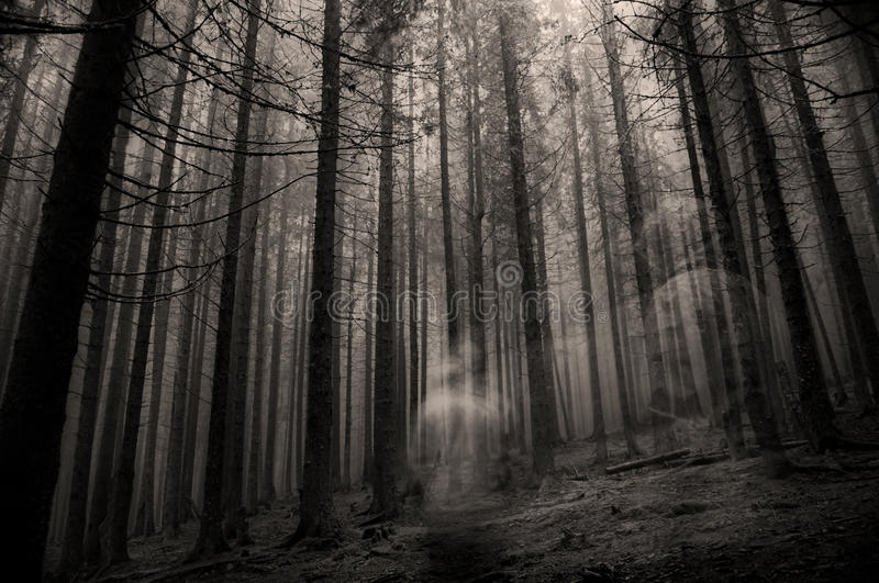 Ghost in the forest royalty free stock photos