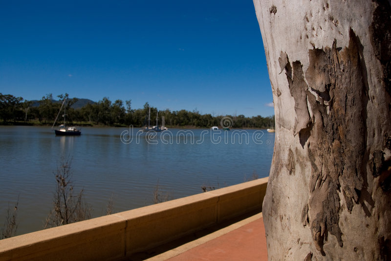Ghost Gum on Fitzroy River stock image