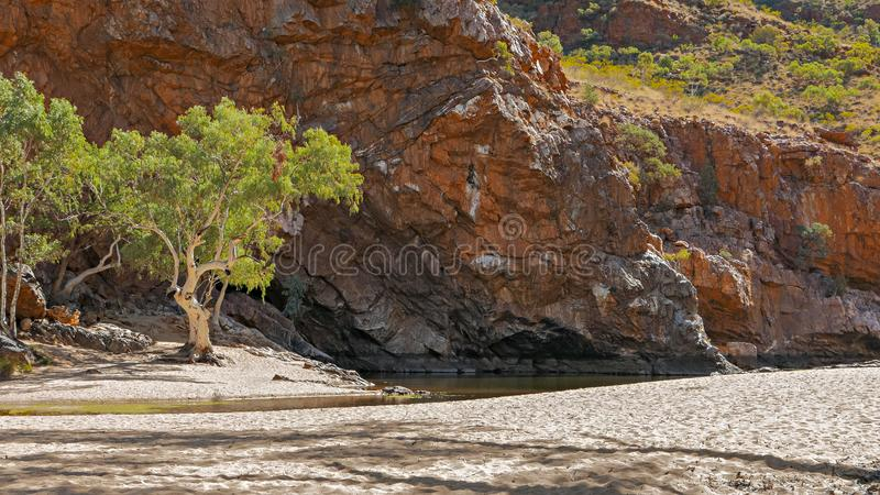 A ghost gums and the dry finke river bed at ormiston gorge. Alice springs royalty free stock photo