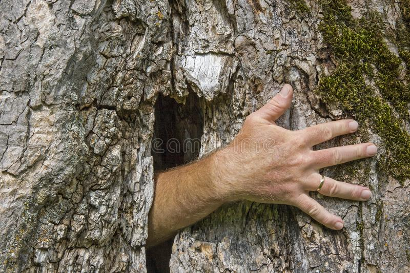 Ghost hand growing out of a tree stock photography