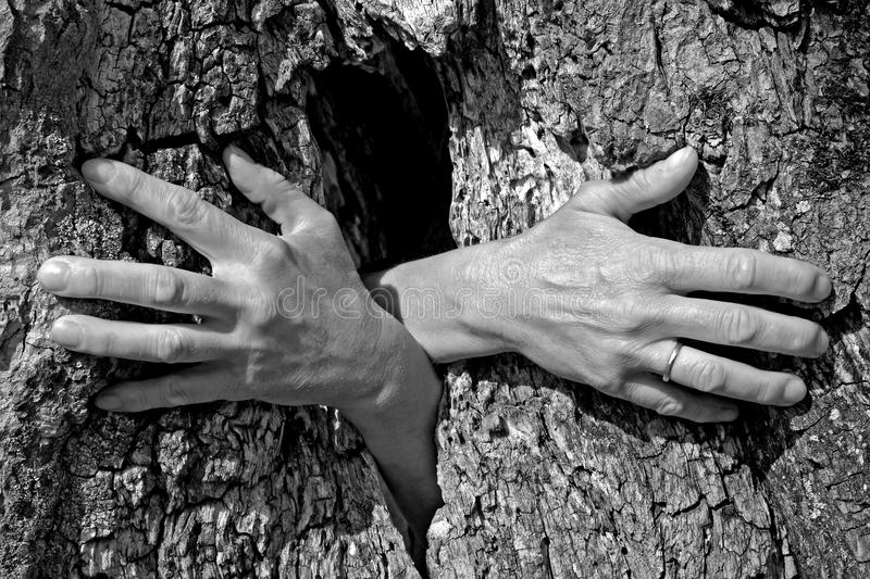 Ghost hands growing out of a tree stock image