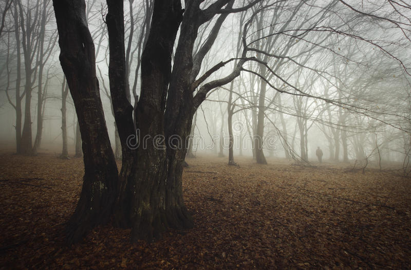 Ghost in mysterious haunted forest with fog. Ghost apparition in mysterious haunted forest with fog in autumn royalty free stock images