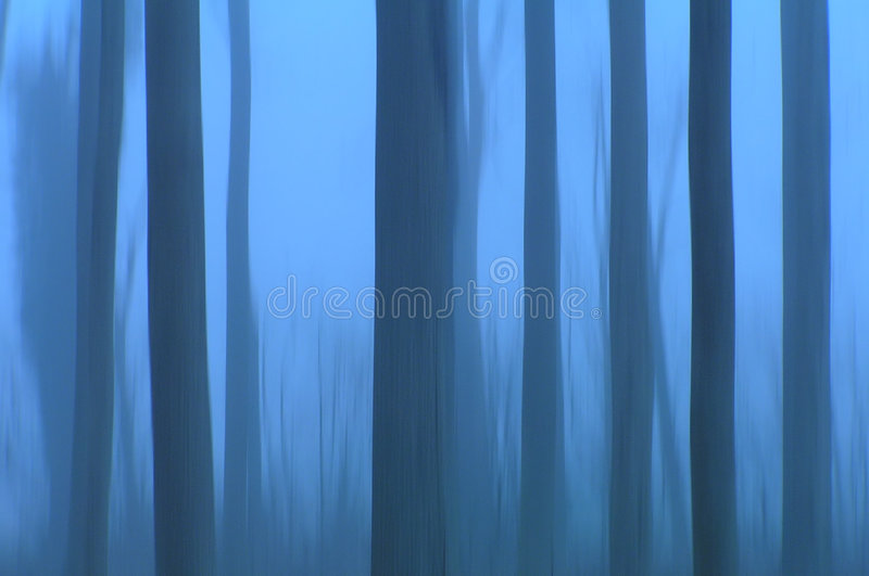 Ghost trees stock image