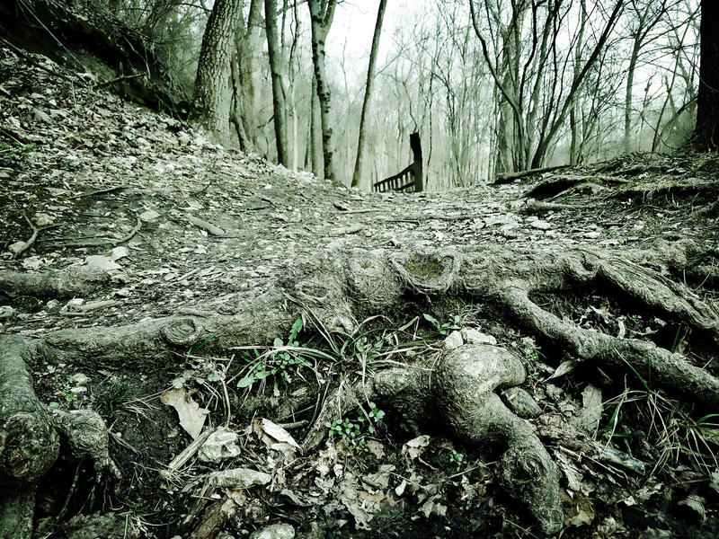 Ghost woods. Creepy woods setting with bridge in the background stock image