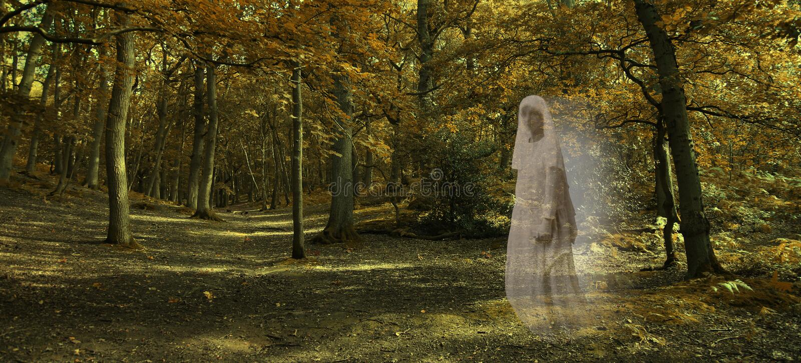 Ghostly figure gliding through Autumn Forest. Wide autumnal woodland scene with a transparent glowing female ghost wafting across from right side staring out and royalty free stock images
