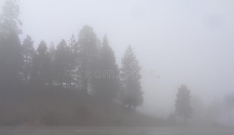 Foggy Mountain Pines royalty free stock images