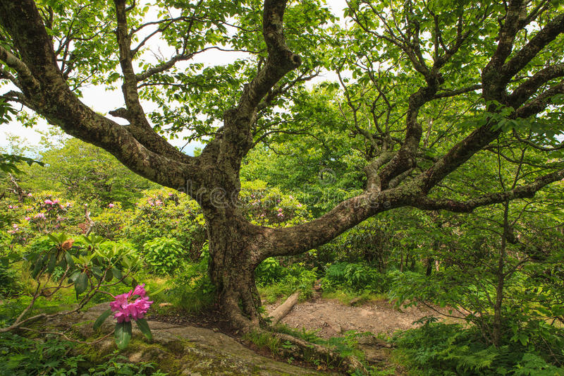 Ghoulish дерево голубое Ридж западный NC стоковые фото