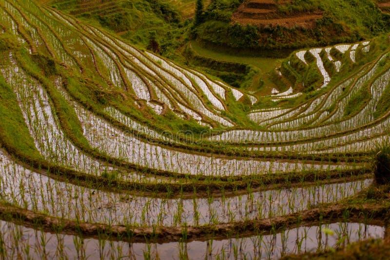 Giù bagni il terrazzo sommerso Titian Longji del riso fotografie stock libere da diritti
