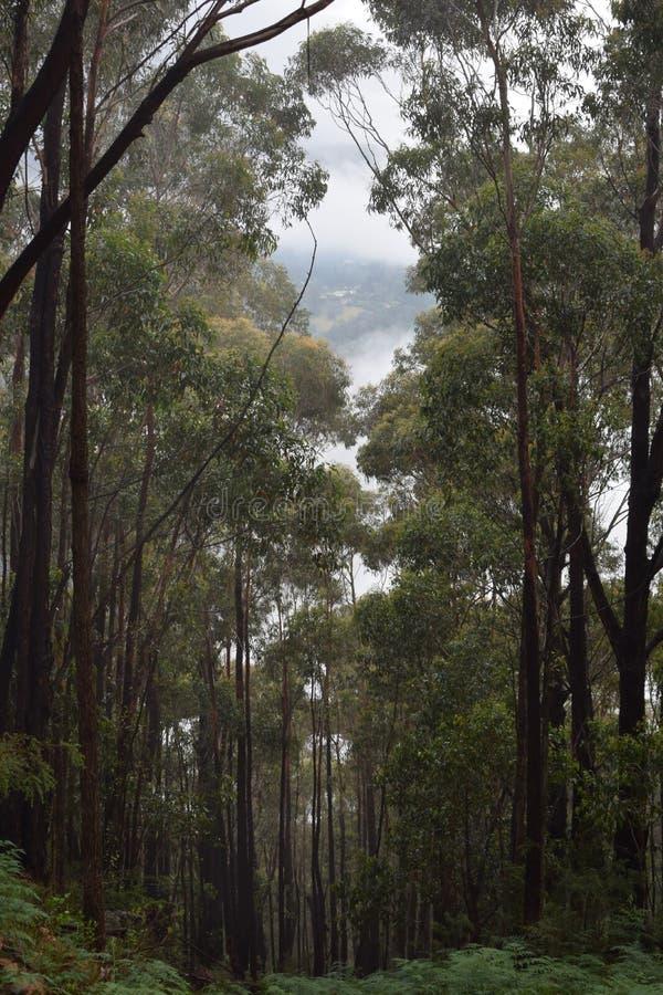 Giù collina scura Forest Path fotografia stock libera da diritti
