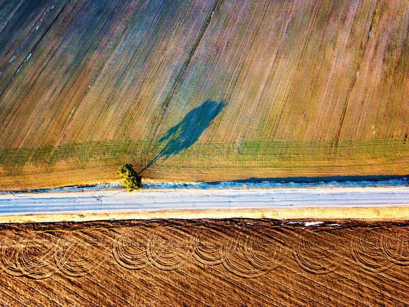 Giacimenti agricoli della primavera Vista superiore Albero solo fotografie stock libere da diritti