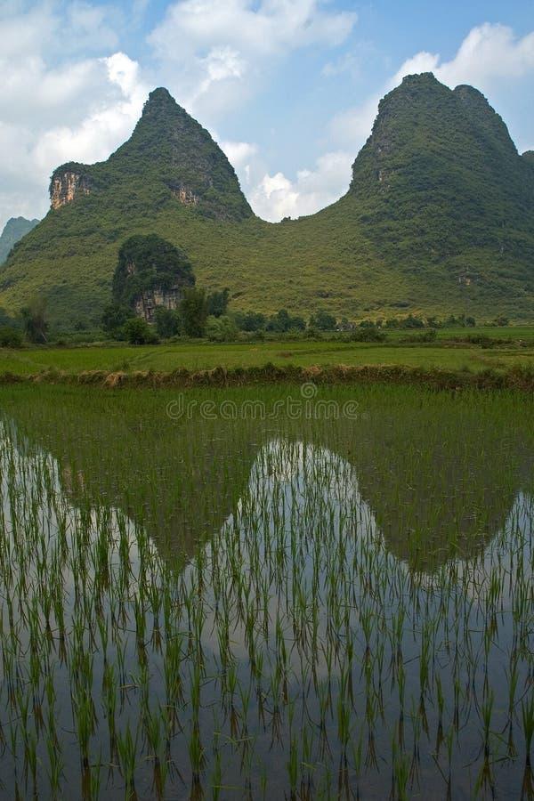 Download Giacimenti del riso fotografia stock. Immagine di specchio - 207222