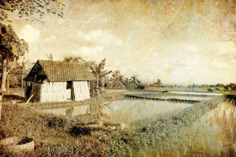 Download Giacimenti del riso fotografia stock. Immagine di pittorico - 3883956