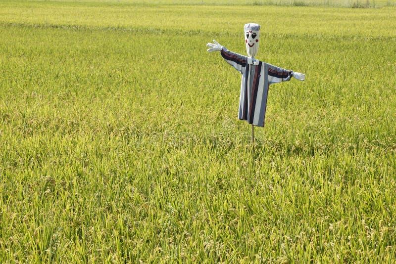 Giacimenti del riso con lo spaventapasseri fotografia stock libera da diritti