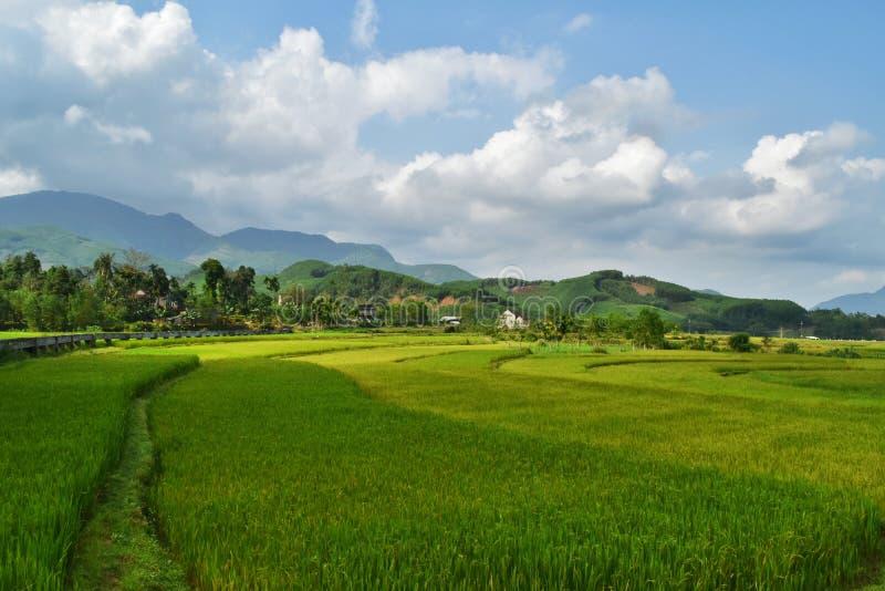 Giacimenti del riso nel Vietnam fotografie stock