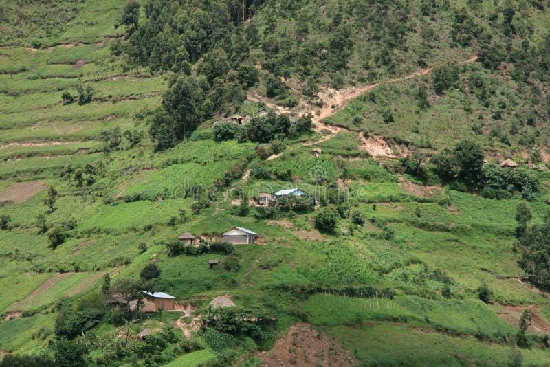 Giacimenti del riso nell'Uganda, Africa fotografie stock