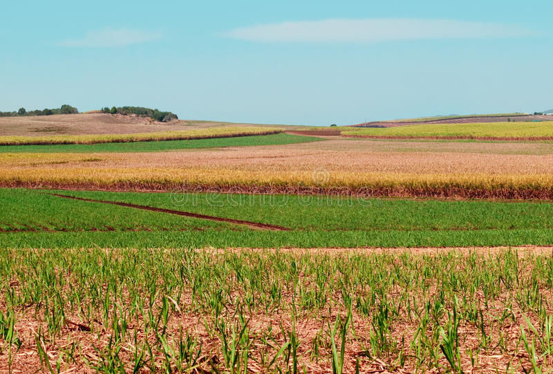 Giacimenti della canna da zucchero per agricoltura australiana fotografia stock libera da diritti