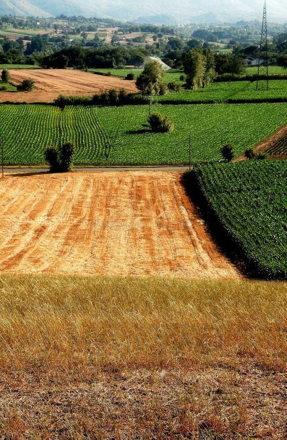 Giacimenti di cereale e del fieno immagine stock