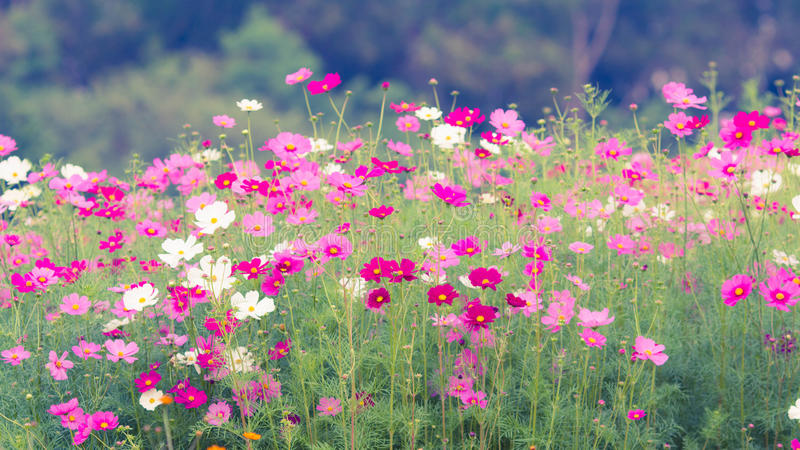 Giacimenti di fiore dell'universo nell'annata della natura fotografia stock