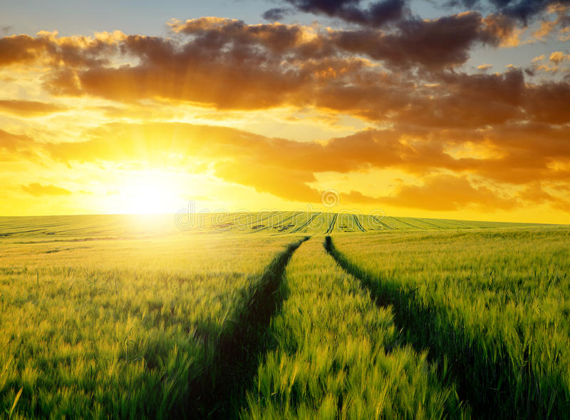 Download Giacimenti di grano fotografia stock. Immagine di nuvoloso - 55359234